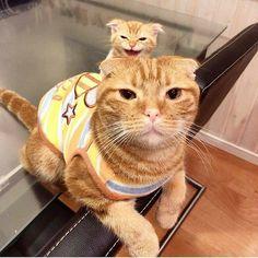 いいね!7,784件、コメント79件 ― My Sweet Catさん(@my_sweetie_cat)のInstagramアカウント: 「 from @c_chan_chan 」