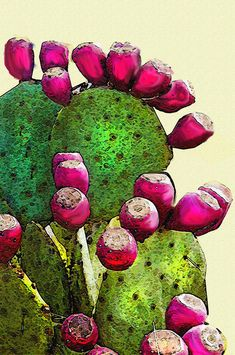 Cactus Digital Art - Prickly Pear Cactus by Jane Schnetlage Cactus Drawing, Cactus Painting, Cactus Art, Cactus Flower, Flower Art, Cactus Decor, Flower Beds, Botanical Art, Botanical Illustration