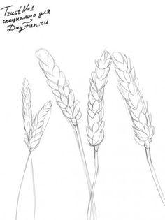 Как нарисовать пшеницу карандашом поэтапно 2