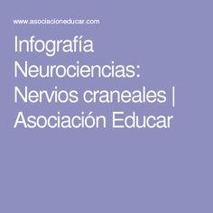 Infografía Neurociencias: Nervios craneales | Asociación Educar