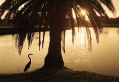 Feather Sound at Sunset - Photo by Mineh Ishida