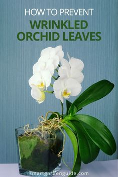 Orchid Leaves, Orchid Flowers, Orchid Plants, All Plants, Phalaenopsis Orchid Care, Orchid Plant Care, Indoor Planters, Indoor Garden, Garden Plants