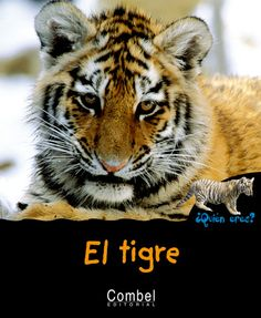 El tigre: Combel Editorial