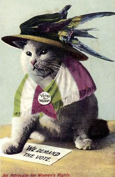 An Advocate for Women's Rights postcard, featuring a cat wearing a Votes for Women badge, United Kingdom, 1910-15, maker unknown.