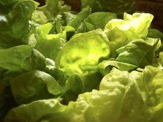 zálivky na salát Pesto, Vinaigrette, Lettuce, Pasta Salad, Salad Recipes, Salads, Food And Drink, Vegetables, Milan