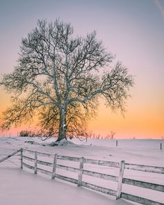 Winter Solitude Photo by Viet Dao -- National Geographic Your Shot