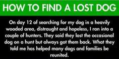 How To Find a Lost Dog. All Dog Owners Must Know THIS!