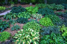 Conrad Art Glass & Gardens: A really nice hosta garden...