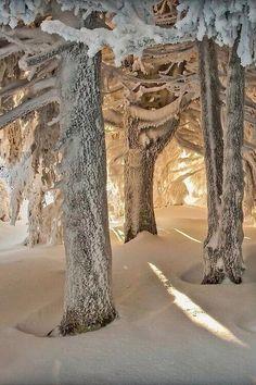 Snow Forest, Pilat, France