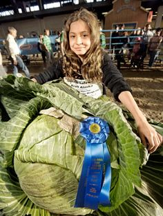 Alaska State Fair | Most Jaw-Dropping Produce.  I went to the fair in Palmer one year and was amazed at the size of the produce. They had a 65 pound cabbage!