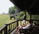 Savute Elephant Camp safari photos, Chobe National Park, Botswana Safari and Botswana travel Chobe National Park, National Parks, Elephant Camp, Luxury Camping, African Safari, Travel Inspiration, Swimming Pools, To Go, Wildlife