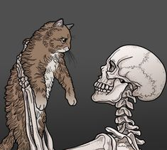Skeleton and kitty Wallpaper Caveira, Skeleton Art, Cat Drawing, Skull Art, Crazy Cats, Dark Art, Art Inspo, Creepy, Cool Art