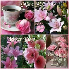 Lekker Dag, Afrikaanse Quotes, Goeie More, Out Of Africa, Good Morning Wishes, Morning Quotes, Messages, Creative, Flowers