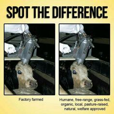 There is no such thing as humane slaughtering.