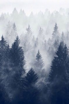 iPhone Wallpaper 5, 6 - Winter Trees Cold Mist: