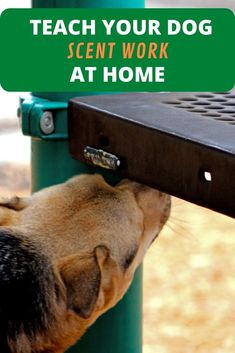 dogsofinstagram #dogstagram #dogsofinsta #dogslife #dogsofig #dogs_of_instagram #dogs #instadog #dogstagram #doglove #dogoftheday #dogsonadventures #belgianmalinois #gsd #malinoisofinstagram #doglovers # #belgianmalinoispuppy #malinoislovers #belgianmalinoisworld #maligator #malinoisworld #malinoisarmy #miamidogs #love #gsd #malinoispuppy #friday #fridayvibes #fridaymood Agility Training For Dogs, Dog Agility, Dog Training Tips, Protection Dog Training, Teach Dog Tricks, Dog Enrichment, Work Train, Dog Training Techniques, Dog Nose