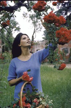 Sophia Loren picks flowers at her Italian villa she shared with producer Carlo Ponti in 1964