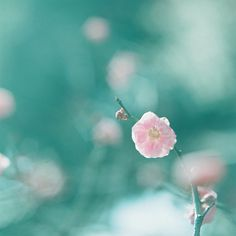 Sometimes a single flower is better