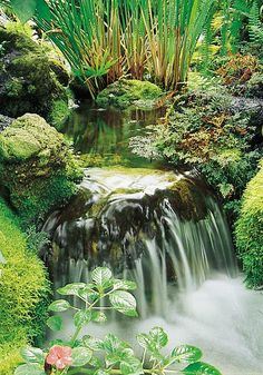 You can use your backyard pond for spending quality family time and have evening tea. The good thing about the backyard pond is that gurgling waterfalls are very much attractive and appealing. So if you haven`t decided on having a pond you must do it now. Backyard Water Feature, Ponds Backyard, Modern Backyard, Backyard Ideas, Garden Ponds, Moss Garden, Pond Waterfall, Small Waterfall, Carpe Koi