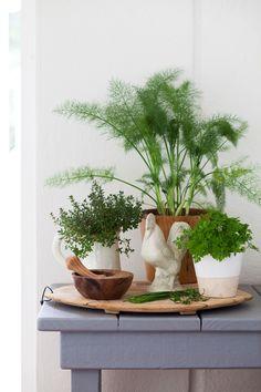 herbs ideas
