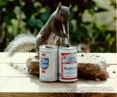 How to keep squirrels away from the bird feeder!
