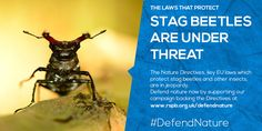 The RSPB: Defend nature