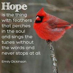 Hope is the thing with feathers that perches in the soul - Emily Dickinson Great Quotes, Inspirational Quotes, Motivational, Awesome Quotes, Signs From Heaven, Hope Is The Thing With Feathers, Bird Quotes, Bird Sayings, Adventure Magazine