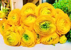 Ranunculus, Flower Pictures, Decoration, Flowers, Decor, Flower Photos, Persian Buttercup, Decorations, Decorating
