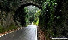 Natureza (Serra de Sintra)