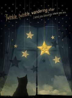 Twinkle twinkle. I love my Twinkle Cat...My Twinkle Dinkle Cat.