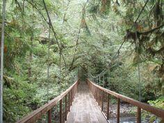 Eagle Fern Park - Hiking in Portland, Oregon and Washington Portland Hikes, Portland Oregon, Fern Park, Moving To Seattle, Kilimanjaro, Hiking Trails, Pacific Northwest, Ferns, Garden Bridge