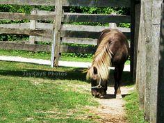 Looks like my first pony I got when I was 8