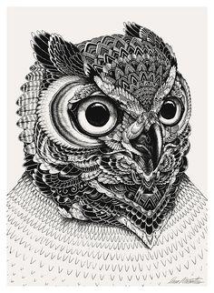 Owl Portraits by Iain Macarthur