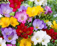 Top 10 of The Most Fragrant Flowers in The World-- All these pretty posies would be such a lovely addition to my front or back yard.
