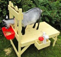 The Henry Milker: How to Build a Goat Milking Stand - The Henry Milker (Goat Bottle Holder) Cabras Boer, Diy Image, Goat Feeder, Goat Pen, Goat House, Goat Care, Nigerian Dwarf Goats, Raising Goats, Sustainable Farming