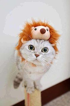 Lustige Halloween Kostüme für Hunde oder Katzen: Terrifying head accessory.
