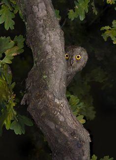 "phototoartguy: ""Night Watch by Valery Moseykin """