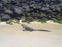 Les plus belles îles au monde Whale, Tours, Animals, Beauty, Animales, Animaux, Whales, Animal Memes, Animal