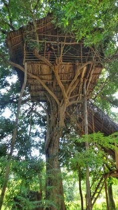 Sleeping in a Tree House in Sri Lanka.. in the middle of the forest.  Location: Dehigaha Ela, near Sigiriya, Read more! #SriLanka