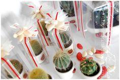 3.bp.blogspot.com -Wu18ijmx_Ig Ub8zfrLj7jI AAAAAAAABLU Qn3RkKqnT5Y s1600 bomboniere+nozze+piante+grasse.JPG