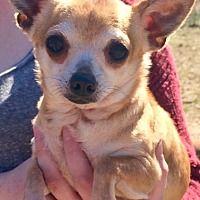 Pet Card Pet Adoption Pets Chihuahua
