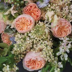 Juliet, David Austin Roses