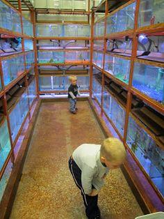 Animal Ark Pet Store