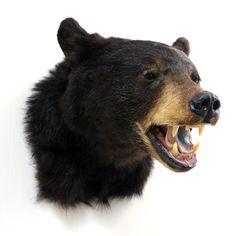 vintage taxidermy black bear head mount by lacklusterco on Etsy