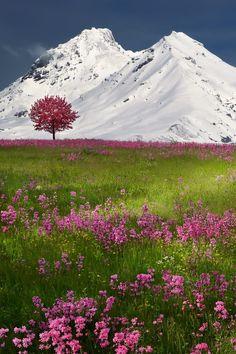 Swiss Alps ~ Brunnen, Switzerland