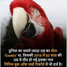 Nature quotes animals pictures Ideas for 2019