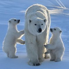 """Our Mom is the Best!"" - photo by Nikolai Zinoviev / 500px"