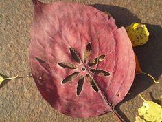 Kukka lehdellä kaiverrettuna mutta liian kovalla teholla