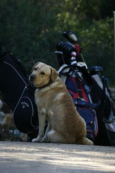 Dogs can stroll in our golf course with their owners!