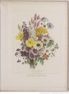 Album Vilmorin. Fleurs rustiques, annuelles et vivaces, légumes et ... Public Domain